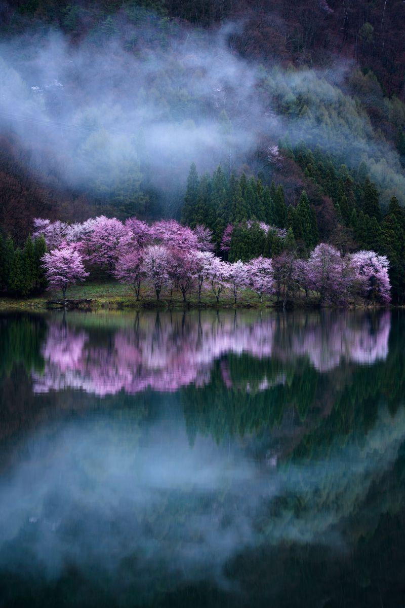 Sakura Guardian by Comyu Matsuoka